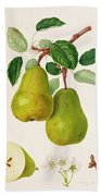 The D'auch Pear Beach Towel by William Hooker