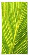 The Detail Of Plant Leaf, Salt Lake Beach Towel