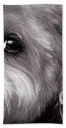 The Dog Next Door Beach Towel by Bob Orsillo