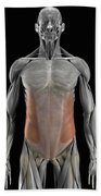 The External Oblique Muscles Beach Towel
