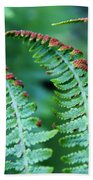 The Fern Beach Towel