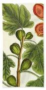The Fig Tree Beach Towel