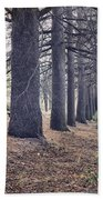 The Forest Of A Thousand Stories Beach Towel