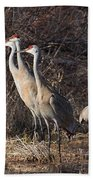 The Gathering...sandhill Cranes Beach Towel