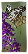 The Glasswing And A Friend  Beach Towel