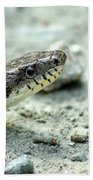 The Gray Eastern Rat Snake Right Side Head Shot Beach Towel