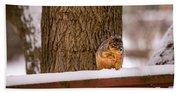 The Grey Squirrel George In Winter Beach Sheet
