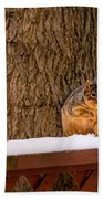 The Grey Squirrel George In Winter Beach Towel