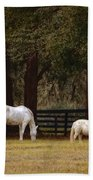 The Horse And The Pony - Standard Size Beach Towel