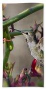 The Hummingbird And The Slipper Plant  Beach Towel