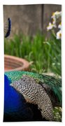 The Indian Peafowl Beach Towel