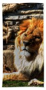 The King Lazy Boy At The Buffalo Zoo Beach Towel
