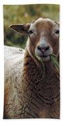 Feed My Sheep Beach Towel