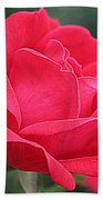 The Last Rose Of Spring Beach Towel