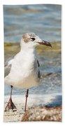 The Laughing Gull Strut Beach Towel