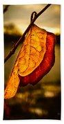 The Leaf Across The River Beach Towel