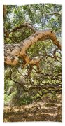 The Life Of Oaks - The Magical Trees Of The Los Osos Oak Reserve Beach Towel