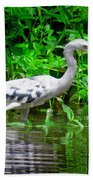 The Little Blue Heron Beach Towel