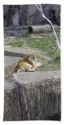 The Lounging Tiger 1 Beach Towel