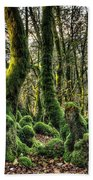The Mossy Creatures Of The  Old Beech Forest 1 Beach Towel