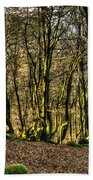 The Mossy Creatures Of The  Old Beech Forest 4 Beach Towel