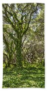 The Mysterious Forest - The Magical Trees Of The Los Osos Oak Reserve. Beach Towel