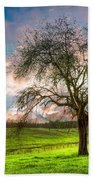 The Old Apple Tree At Dawn Beach Towel