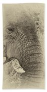 The Old Elephant Bull Beach Towel