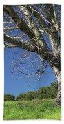 The Old Oak Tree Beach Towel