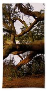 The Old Tree At The Ashley River In Charleston Beach Towel by Susanne Van Hulst