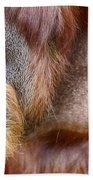 The Orangutan Album  Beach Towel
