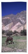 The Painters Palette Jujuy Argentina Beach Towel
