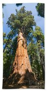 The President - Very Large And Old Sequoia Tree At Sequoia National Park. Beach Towel
