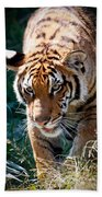Prowling Tiger Beach Towel