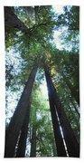 The Redwood Giants Beach Towel