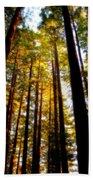 The Redwoods Of Florence Keller Park Beach Towel