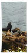 The Sea Lion And His Harem Beach Towel by Mary Machare