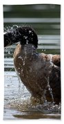 The Shake Off - Canadian Goose Beach Towel