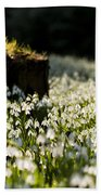 The Stump And The Snowdrops Beach Towel by Anne Gilbert