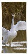 The Swan Spreads Its Wimgs Beach Towel
