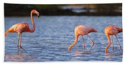 The Three Flamingos Beach Towel