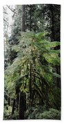 The Tree In The Forest Beach Towel