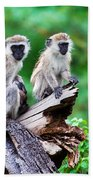 The Vervet Monkey. Lake Manyara. Tanzania. Africa Beach Towel