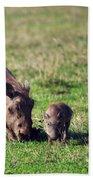 The Warthog Family On Savannah In The Ngorongoro Crater. Tanzania Beach Towel