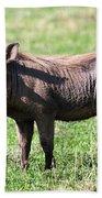 The Warthog On Savannah In The Ngorongoro Crater. Tanzania Beach Towel