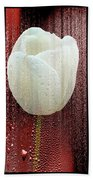 The White Tulip Beach Towel