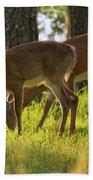 The Whitetail Deer Of Mt. Nebo - Arkansas Beach Towel