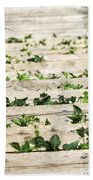 There Is No Stopping Nature Beach Towel
