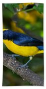 Thick-billed Euphonia Beach Towel
