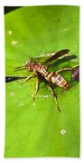 Thirsty Bee On Waterlily Beach Towel